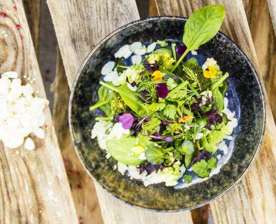 Photo menu Salade d'herbes et fleurs du jardin